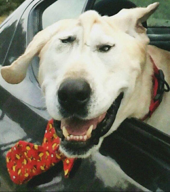 Cão Abandonado Por Ter Deformação Facial Ganha Nova Oportunidade Para Ser Feliz Num Novo Lar 14