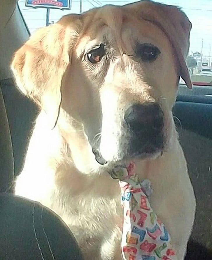 Cão Abandonado Por Ter Deformação Facial Ganha Nova Oportunidade Para Ser Feliz Num Novo Lar 18