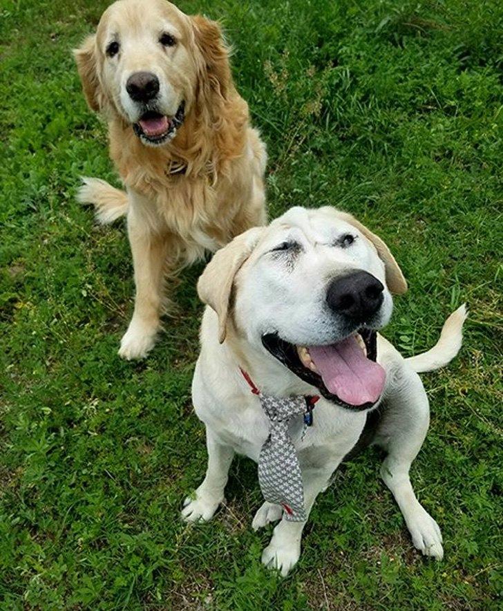 Cão Abandonado Por Ter Deformação Facial Ganha Nova Oportunidade Para Ser Feliz Num Novo Lar 8