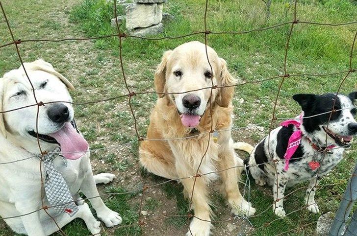 Cão Abandonado Por Ter Deformação Facial Ganha Nova Oportunidade Para Ser Feliz Num Novo Lar 9