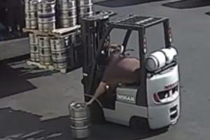 Trabalhador Com Excelentes Reflexos Consegue Apanhar Barril De Cerveja Que Cai Do Empilhador 10