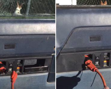 Condutor Encontra Alternativa Criativa Após Avaria No Vidro Elétrico 2