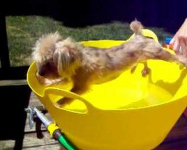 Cão Detesta Tomar Banho e Faz de Tudo Para Não Tocar Na Água 2