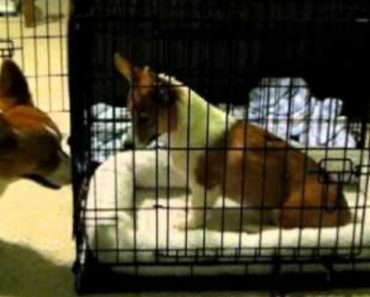 Cão Ajuda o Seu Amigo a Fugir Da Jaula 5