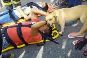 Cão Desesperado Recusa-se a Sair De Perto Do Dono Após Acidente 7