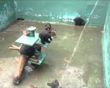 Ursinho Diverte-se Com a Água Enquanto Trabalhador Tentava Lavar o Local 3