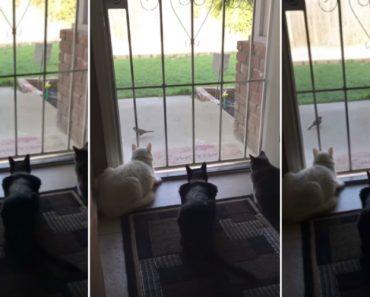 Gatos Focados Em Ver Pássaro Têm o Susto Das Suas Vidas 6