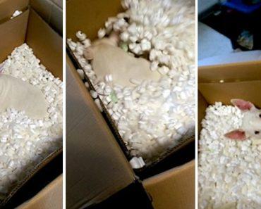 Dona Preparava-se Para Guardar Material Dentro De Enorme Caixa Mas o Seu Cão Tinha Outra Ideia 5