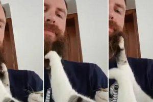 Carinhoso Gato Adora Massajar a Barba Do Seu Dono 10