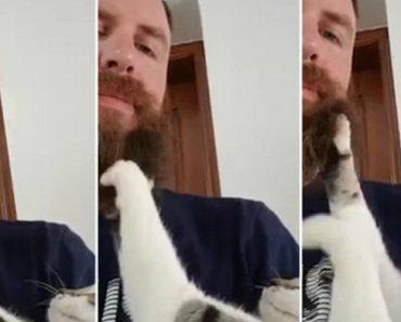 Carinhoso Gato Adora Massajar a Barba Do Seu Dono 1