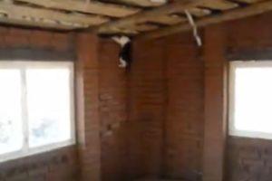Gato Focado Em Apanhar Pássaro Ultrapassa Qualquer Obstáculo 10