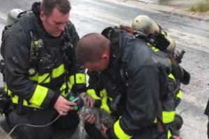Bombeiros Salvam Gatinho Com Máscara De Oxigénio Após Incêndio 8