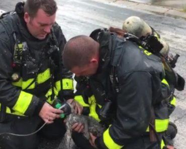 Bombeiros Salvam Gatinho Com Máscara De Oxigénio Após Incêndio 7