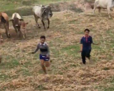 Vacas Não Ficaram Nada Contentes Com a Dança De Um Grupo De Adolescentes 8