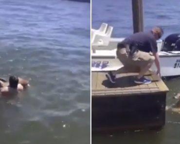 Homem Salta Para Lago Para Salvar Veado Em Apuros 4