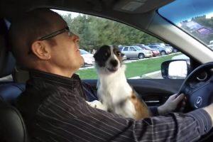 Cão Fica Eufórico Ao Perceber Que o Seu Dono o Está a Levar Ao Parque 6
