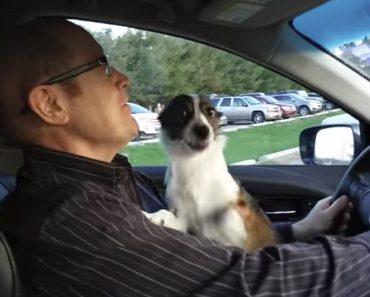 Cão Fica Eufórico Ao Perceber Que o Seu Dono o Está a Levar Ao Parque 9