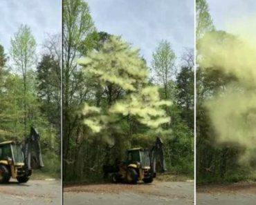 Intensa Nuvem De Pólen Cai Sobre Retroescavadora Após Tocar Numa Árvore 7