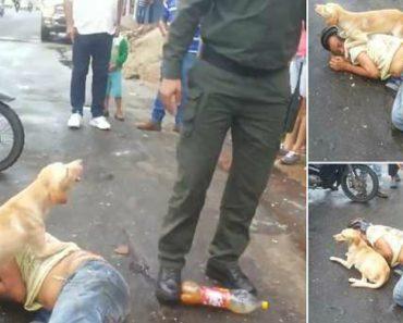 Fiel Cão Protege Dono Embriagado Que Adormeceu No Meio Da Rua 8