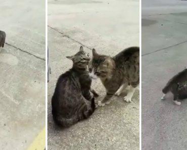Como Se Pára Uma Briga De Gatos De Rua 4