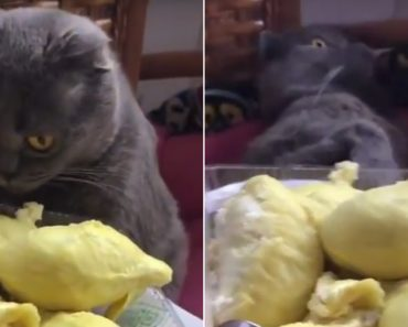 Gato Quase Desmaia Ao Sentir o Cheiro De Um Dos Frutos Mais Repugnantes Do Mundo 8