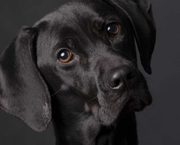 Aquilo Que Sempre Suspeitou: O Seu Cão Percebe o Que Diz 4