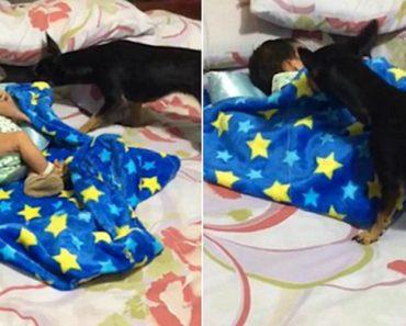 Adorável Cachorrinho Aconchega Bebé Na Hora De Dormir 6