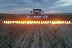 Como Se Eliminam As Ervas Daninhas De Um Campo De Milho Orgânico Sem Usar Pesticidas 9