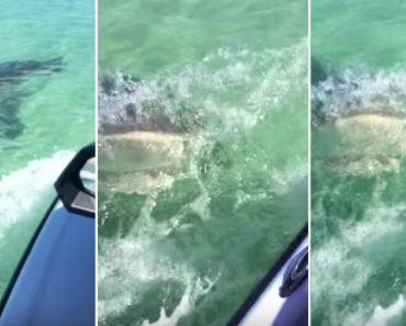 Praticante De Jet Ski Apanha Enorme Susto Depois De Ser Perseguido e Atacado Por Tubarão 8