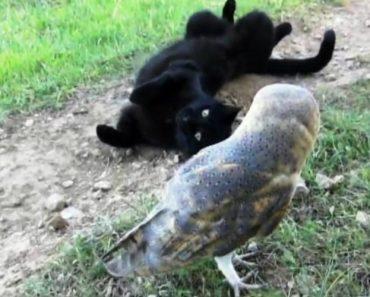 A Surpreendente Amizade Entre Um Gato e Uma Coruja 8
