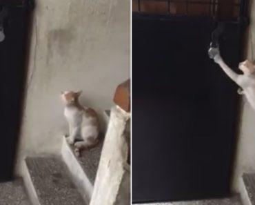 Educado Gato Sabe Como é Importante Bater à Porta Quando Se Quer Entrar Em Casa 5
