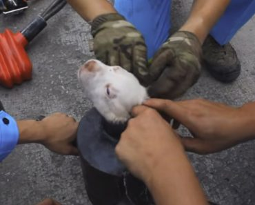 Equipa De Resgate Salva Cachorrinho Preso Em Tubo De Escape 5