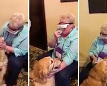 Emocionante Momento Em Que Invisual Consegue Ver O Seu Cão Guia Pela 1ª Vez 1