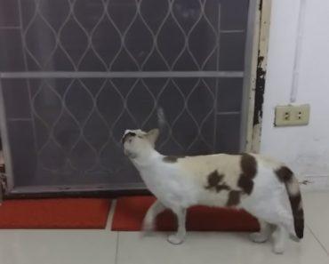 Inteligente Gato Descobre Maneira Original Para Sair De Casa 4