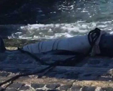Baleia Encalhada Junto Ao Cais do Sodré, Em Lisboa 8