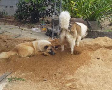Descontraído Cão Não Se Deixa Incomodar Com As Travessuras Do Melhor Amigo 5