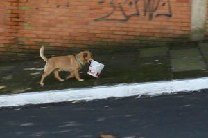 Conheça o Cãozinho Que Percorre As Ruas Com Balde Na Boca Para Ir Buscar Comida Ao Restaurante 10