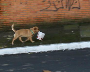 Conheça o Cãozinho Que Percorre As Ruas Com Balde Na Boca Para Ir Buscar Comida Ao Restaurante 8