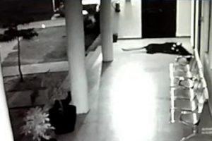 Corajosa Cadela Defende a Sua Cria Do Ataque De Um Leopardo Faminto 10