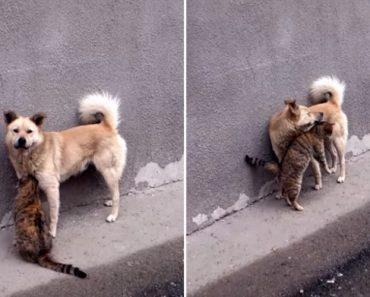 Gato Obcecado Por Cão Não Aceita Ser Ignorado 3