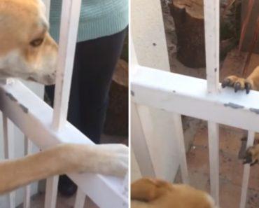 Cão Recusa-se a Passear Se o Seu Melhor Amigo Não For Com Ele 3
