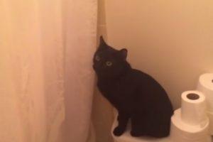 Gato Protetor Fica Verdadeiramente Preocupado Quando Ouve a Sua Dona a Cantar No Chuveiro 10