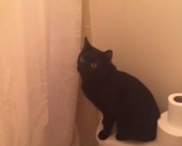 Gato Protetor Fica Verdadeiramente Preocupado Quando Ouve a Sua Dona a Cantar No Chuveiro 4