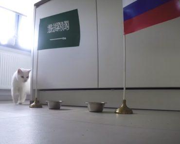 Gato Adivinho Já Previu Quem Ganha o Jogo Inaugural Do Mundial 9