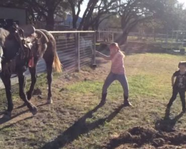 Cavalo Junta-se Ás Suas Pequenas Donas Para Um Momento De Dança 4