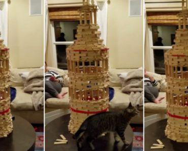 Gato Curioso Deita Abaixo Escultura Feita Em Blocos De Madeira 8