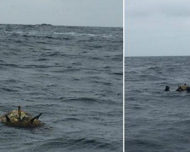 Mina Marítima a Flutuar Ao Largo Da Ilha Berlenga Encontrada Por Pescadores 6
