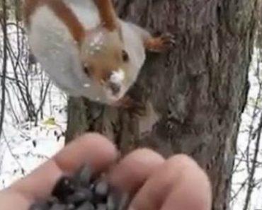 Animais Selvagens Não Resistem Em Comer Da Mão De Homem Ao Verem Sementes De Girassol 7