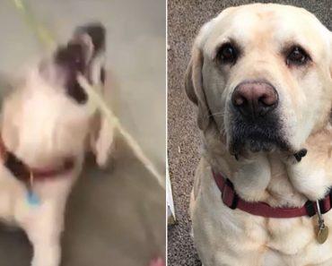 Inteligente Cão Salva a Dona Que Acidentalmente Ficou Trancada 5