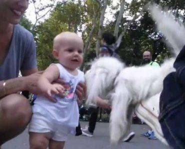 Esta Marioneta Está Tão Realista Que Quase Nos Faz Acreditar Que é Um Cão Real 3